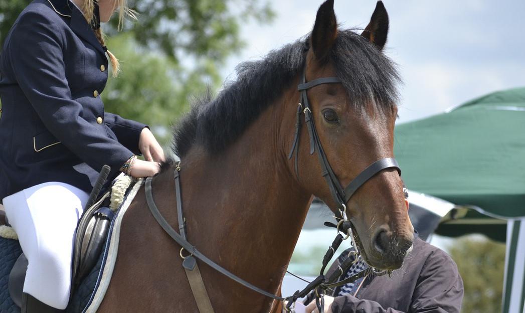 Bild einer Reiterin auf einem Pferd während eines Turniers