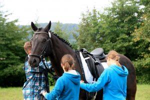 Vorbereitung des Pferds auf dem Tunierplatz